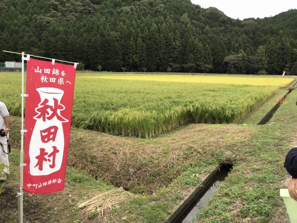 akita-sake-yamadanishiki-3